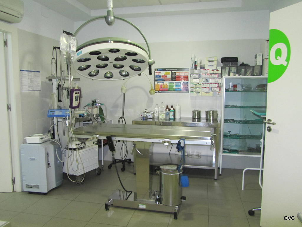 Clinica veterinaria cervantes pagina informativa de la - Diseno de clinicas veterinarias ...